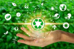Hand holding with environment icons over the Network connection on nature background, Technology ecology concept royalty free stock images