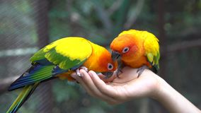 Hand Holding and Feeding Parrots - Animal Care Concept.