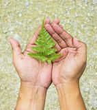 Hand holding fern leaf Royalty Free Stock Images