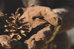 Hand holding Fir cone Stock Images