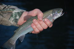 Hand holding fish Royalty Free Stock Image