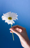 Hand holding flower Stock Photo