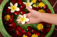 Hand holding flower Royalty Free Stock Images