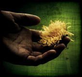 Hand holding a flower. A man's hand holding a yellow flower Stock Photo
