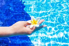 Hand Holding Flower in Blue Water Royalty Free Stock Photos