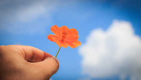 Hand holding a flower Royalty Free Stock Images