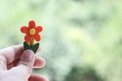 Hand holding flower stock photography