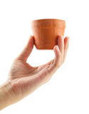 Hand holding a flower pot Stock Image