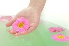 HAND HOLDING A FLOWER IN SPA Royalty Free Stock Photography