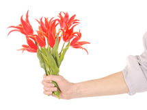 Hand holding flowers Royalty Free Stock Photos