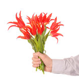 Hand holding flowers Stock Photography