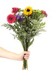 Hand Holding Flowers. To white background Stock Images