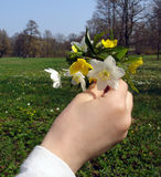 Hand Holding Flowers. Hand of girl Holding Flowers Royalty Free Stock Photo