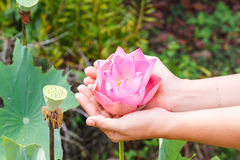 Hand holding flowers Royalty Free Stock Photography