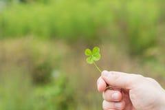 Hand holding four leaf clovers stock photos