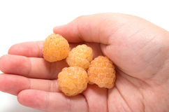 Hand holding four yellow raspberries Stock Photography