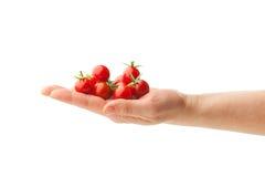 Hand holding fresh cherry tomatoes Stock Image