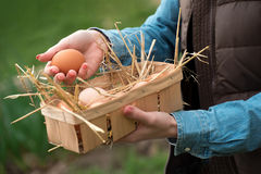 A hand holding a fresh chicken egg and organic eggs in a basket Royalty Free Stock Photo