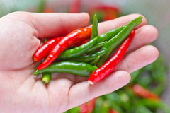 Hand holding fresh chili peppers Royalty Free Stock Photos
