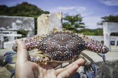 Hand holding fresh crab. At the sea Royalty Free Stock Photo