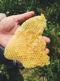 Hand holding fresh honeycomb taken from beehive Royalty Free Stock Image