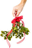 Hand holding fresh mistletoe Stock Photography