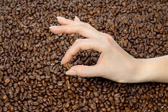 Hand holding Fresh roasted coffee bean Stock Photography