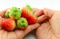 Hand holding fresh strawberry Royalty Free Stock Images