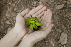 Hand holding a fresh young plant  saving new life Royalty Free Stock Images