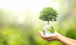 Free Hand Holding Glass Globe Ball With Tree Growing And Green Nature Blur Background. Eco Concept Royalty Free Stock Image - 161081206