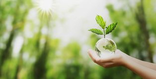 Free Hand Holding Glass Globe Ball With Tree Growing And Green Nature Blur Background. Eco Concept Stock Photos - 161653633