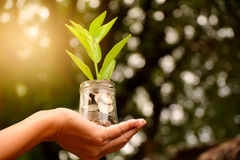 Hand holding glass jar and have plant on coins for save money an stock image