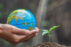 Hand holding the globe and having a small tree, concept of World Environment Day.  royalty free stock image