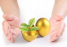 Hand Holding  golden eggs Royalty Free Stock Photography