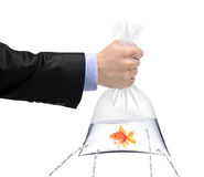 Hand holding a golden fish in a bag with holes Royalty Free Stock Image
