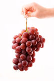 Hand holding grapes Stock Photography