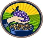 Hand Holding Grapes Raisins Oval Woodcut Royalty Free Stock Image