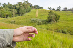 Hand holding grass flowers on nature background Royalty Free Stock Photo