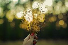 Hand holding the grass in sun Royalty Free Stock Photo