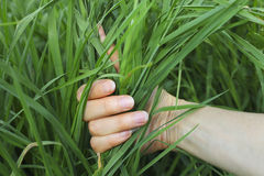 Hand holding grass Stock Photos