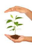 Hand holding green baby plant Stock Image