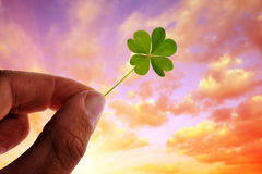 Hand holding green four leaf clover Stock Photo