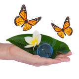 Hand holding green leaf and earth with butterflies Royalty Free Stock Photography