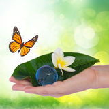 Hand holding green leaf and earth Stock Images