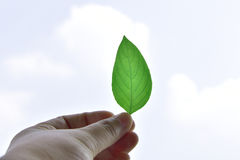 Hand holding green leaf of plant show on the sky at sunny day. Soft focus Royalty Free Stock Photography