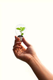 Hand holding green plant in light bulb Stock Images
