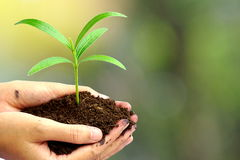 Hand holding green plant in soil over blur abstract nature , Royalty Free Stock Photo