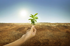 Hand holding green plant with sunlight stock photos