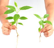 Hand holding green plants on white Stock Image