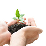 Hand holding green sapling with soil Royalty Free Stock Photos